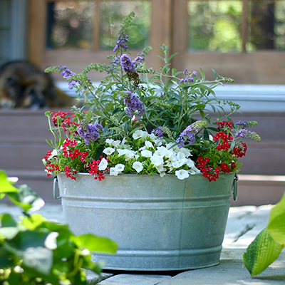 How to Create Planters with Red, White and Blue Flowers