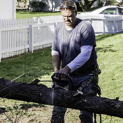 How to Cut Down a Tree
