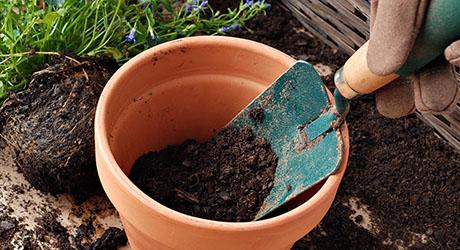 Dig up the root ball - Dividing Perennials
