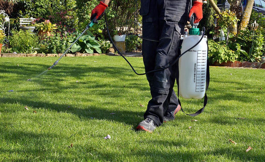 A person treating a lawn with a spray.