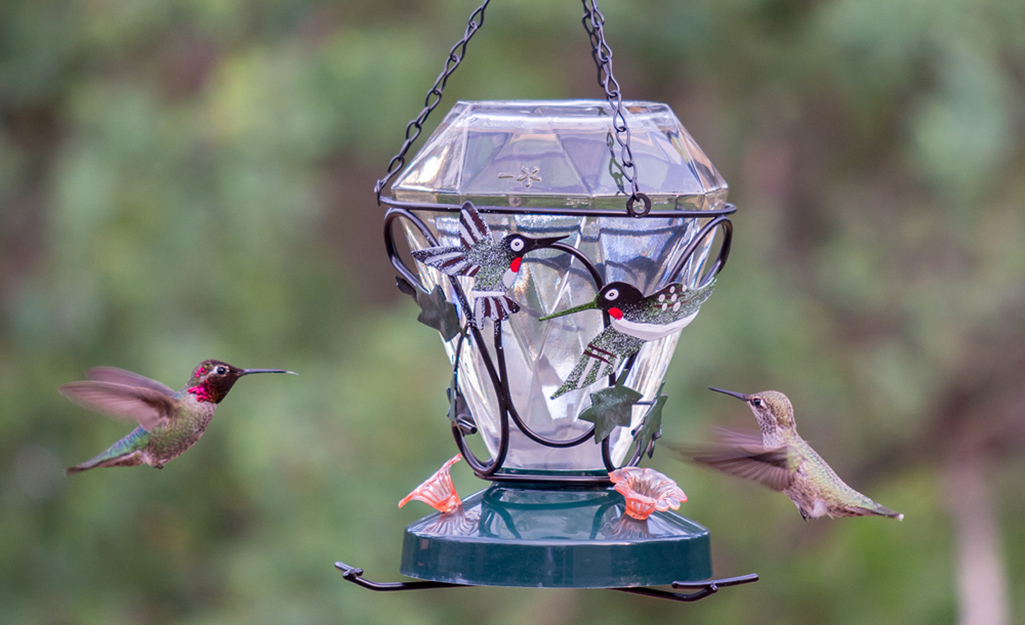 Two hummingbirds flying to the feeding ports on a hummingbird feeder.