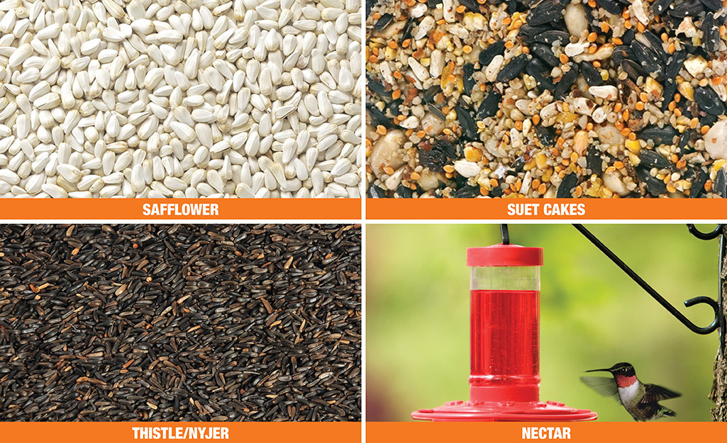 A four-image collage showing safflower seeds, a suet cake, thistle (Nyjer) seeds and red-colored nectar in a hummingbird feeder as a hummingbird approaches.