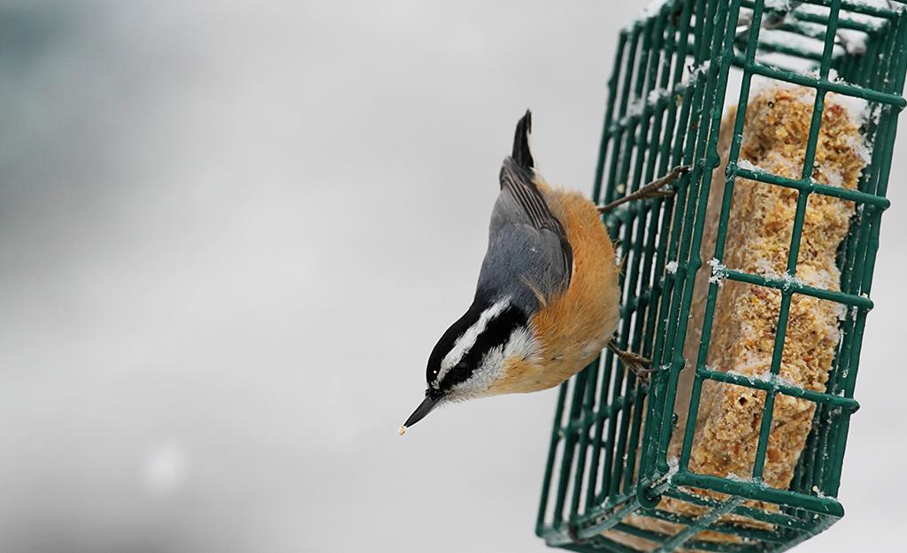 Feed Overwintering Birds