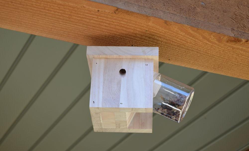 A carpenter bee trap hangs from a wooden rafter.