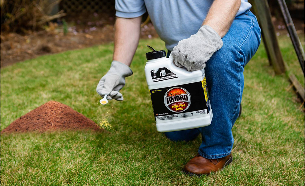Person using fire ant killer on a mound.