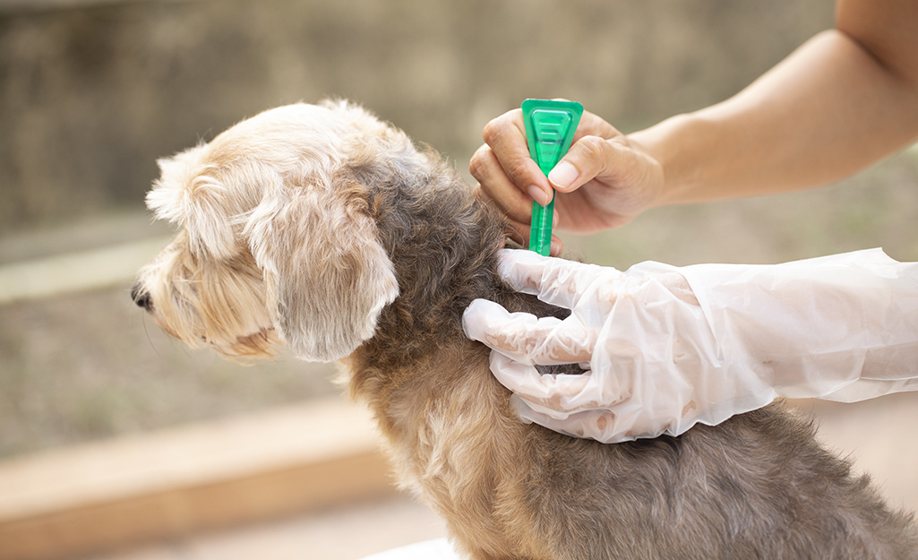 Dog being treated for fleas.
