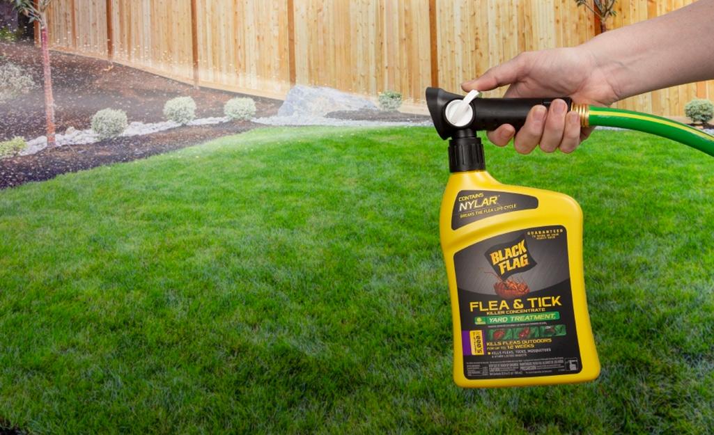 Person using outdoor flea spray.