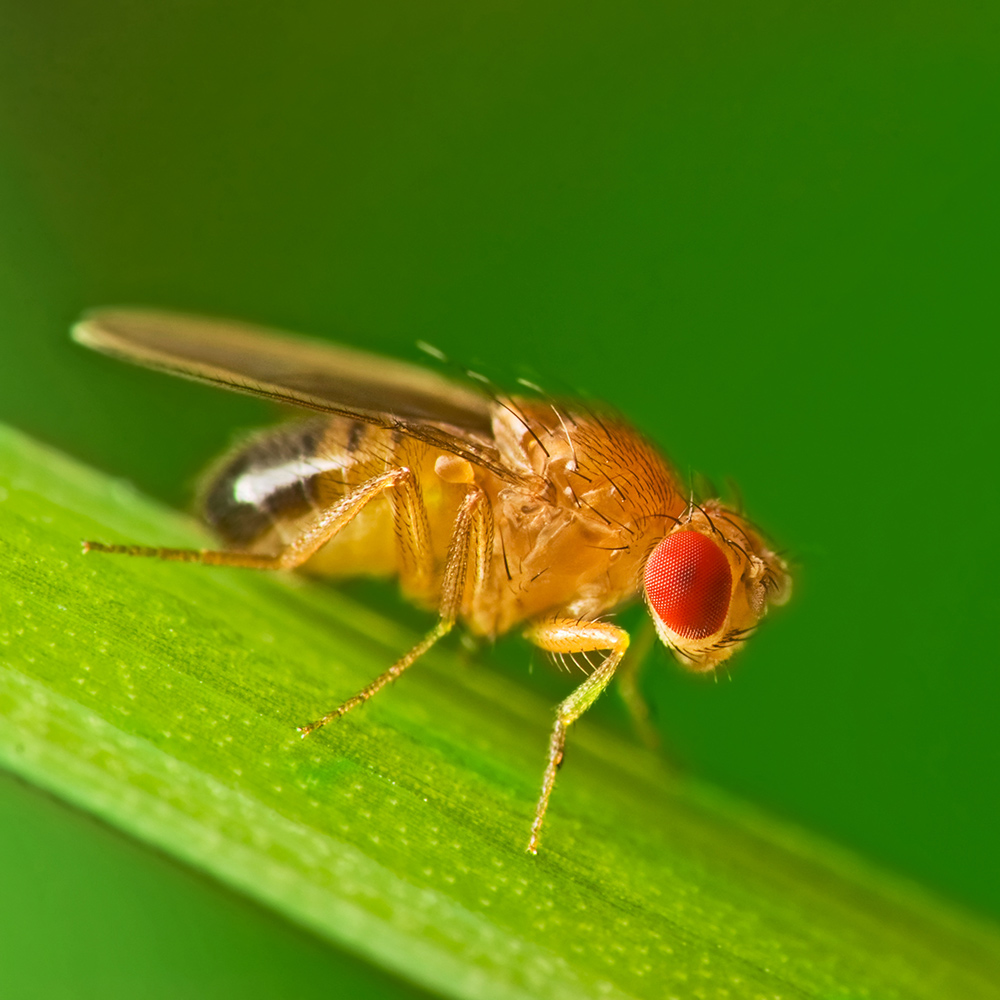 How To Get Rid Of Fruit Flies The Home Depot
