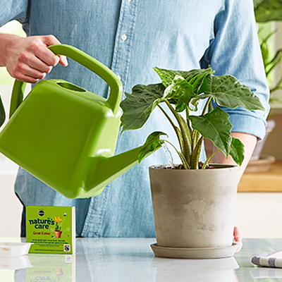 A person watering a plant with a green watering can