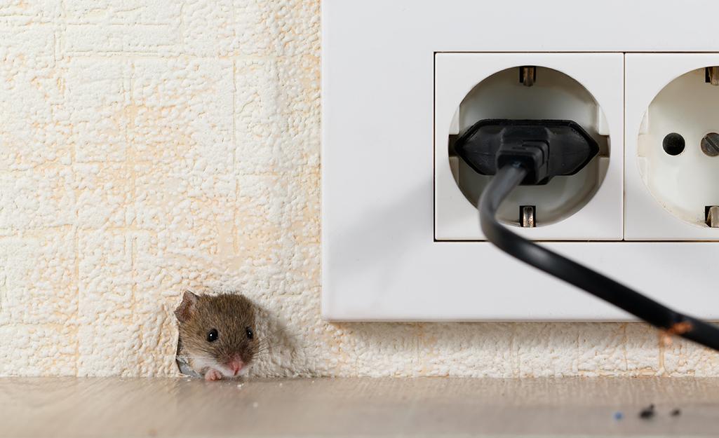 Une souris qui passe sa tête à travers un trou de souris dans un mur à côté d'une prise.