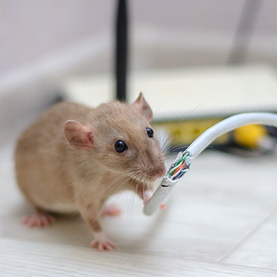 How to Get Rid of Mice - The Home Depot