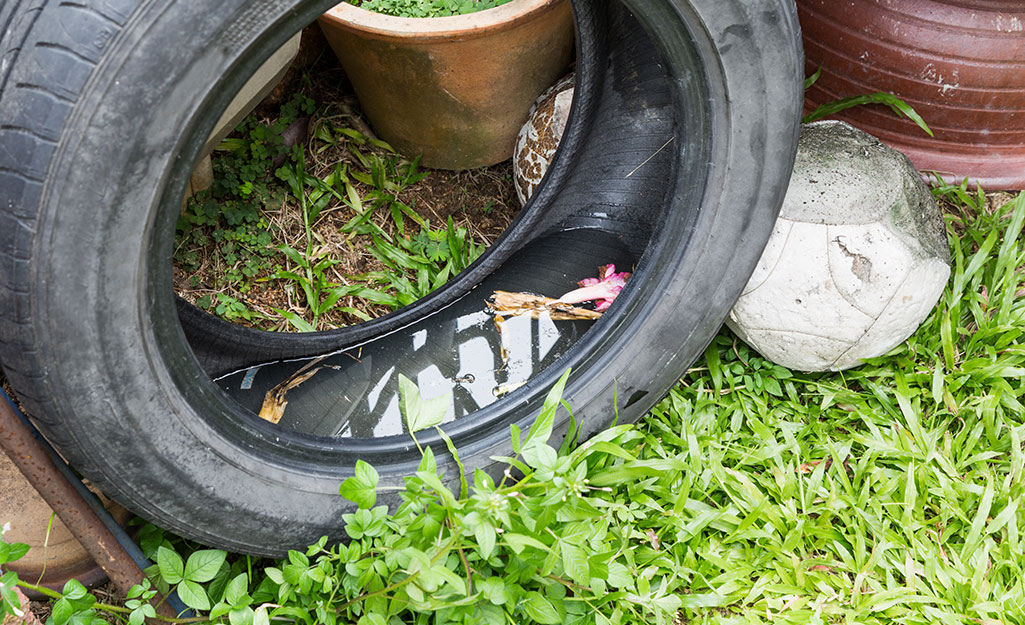 An old tire in a yard contains standing water.