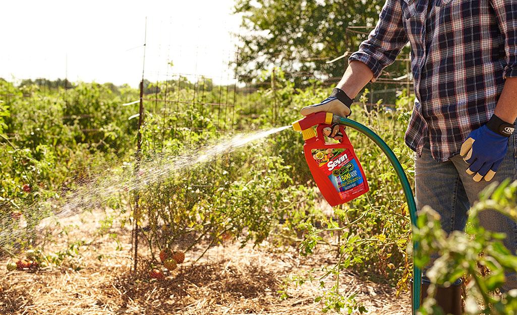Gardener spraying for pests in garden