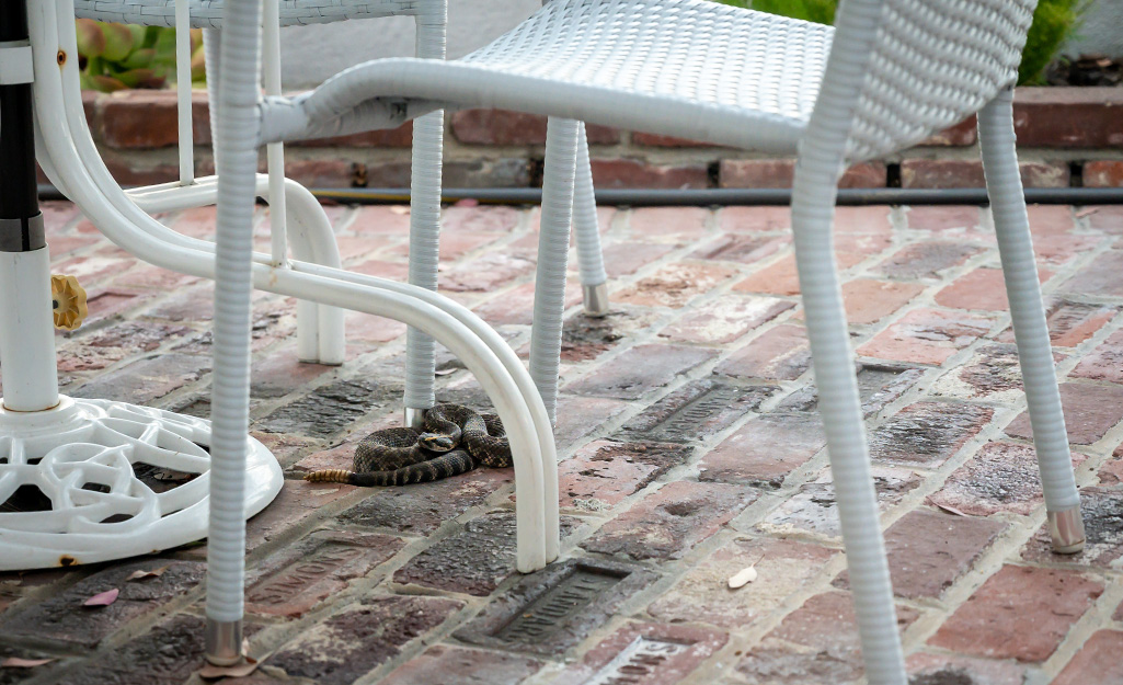 Snake hiding under an outdoor seating set.