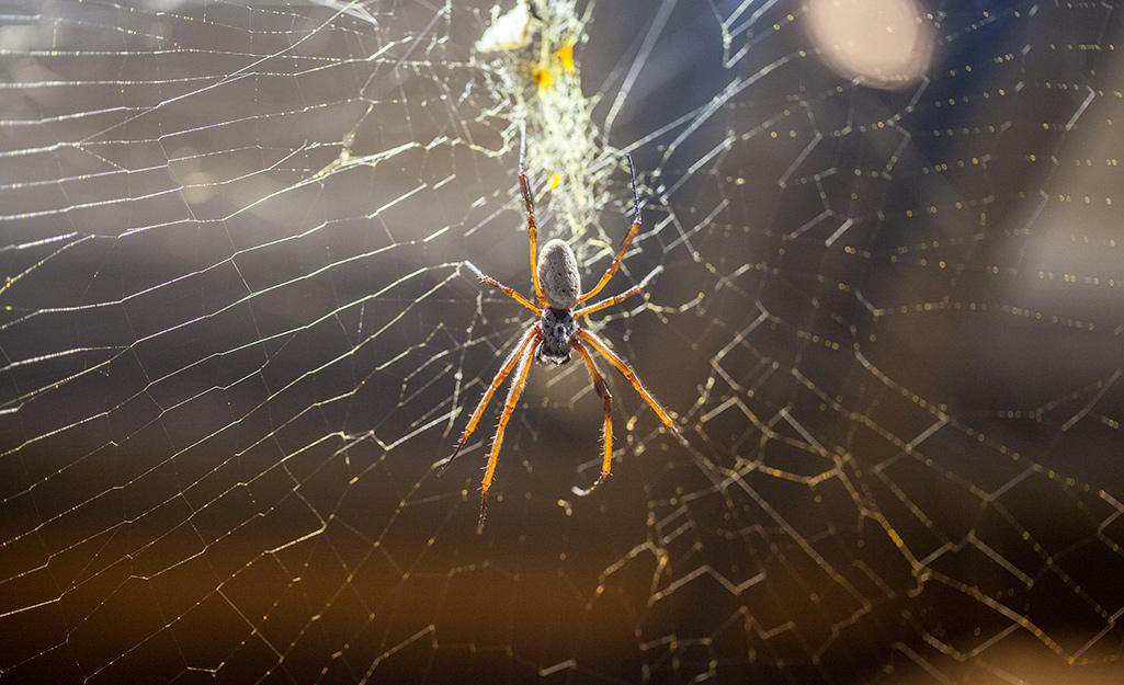 Một con nhện treo trên mạng.