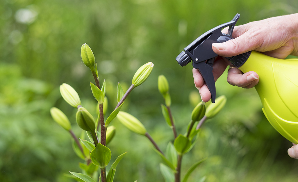 A person uses a spray bottle to spray a plant.
