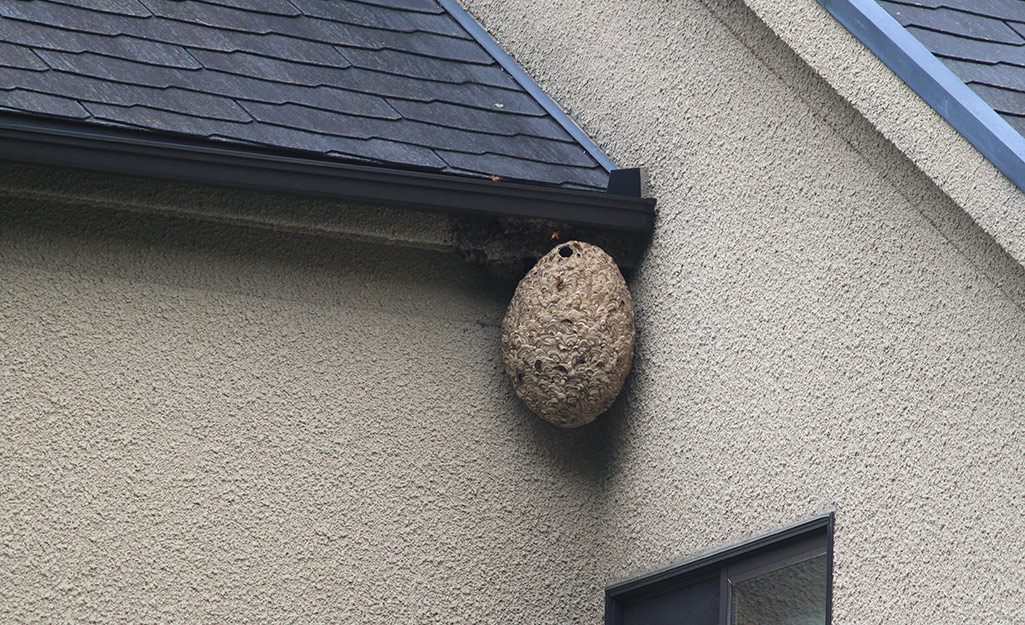 A wasp nest in the corner of a house.