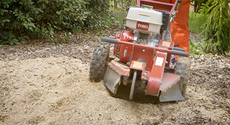 A stump grinder running over tree roots.
