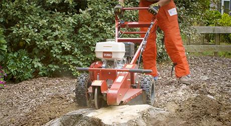 Man using a stump grinder on a large stump