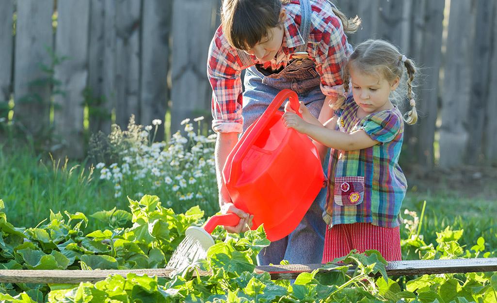 Gardener watering cucumber plants