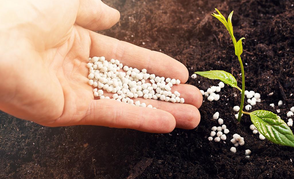 Gardener spreading fertilizer by seedling