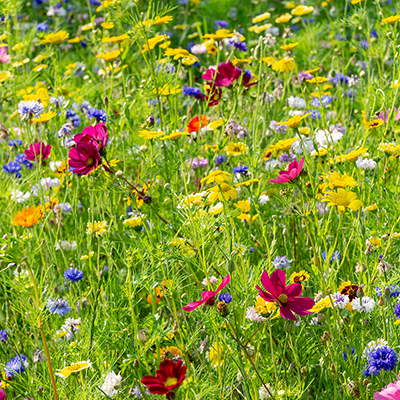 Wildflowers growing in a meadow
