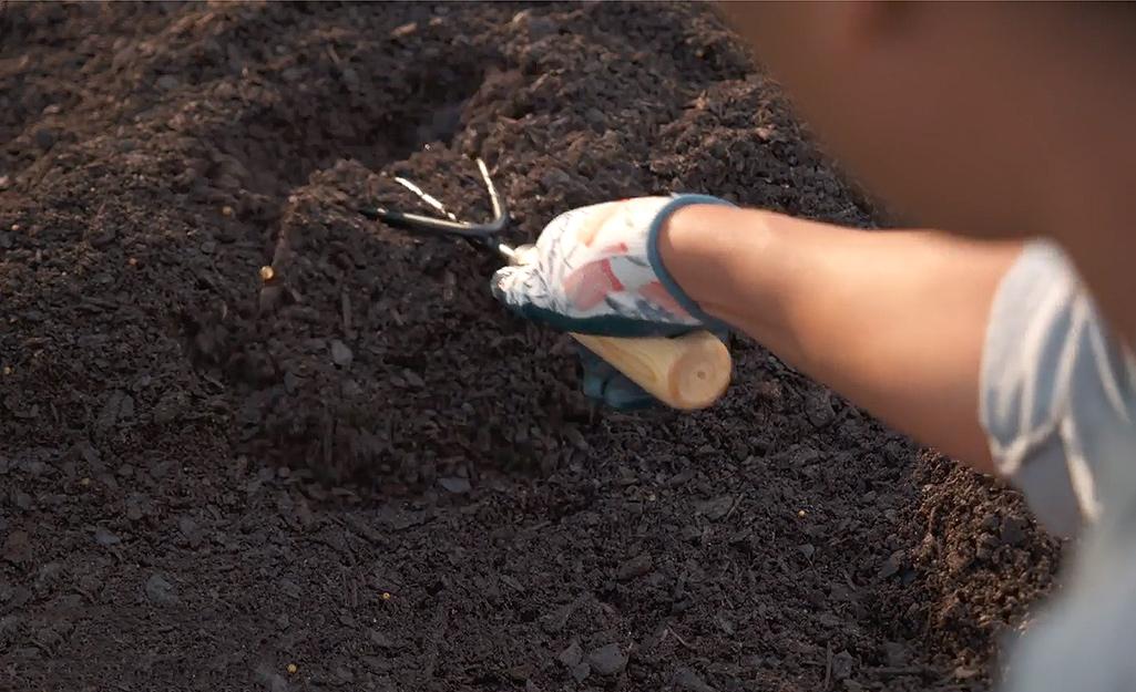 A gardener uses a hand rake to prep the site.