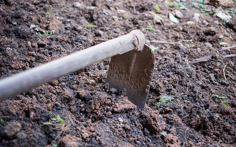 Gardener digs with a hoe to grow garlic cloves