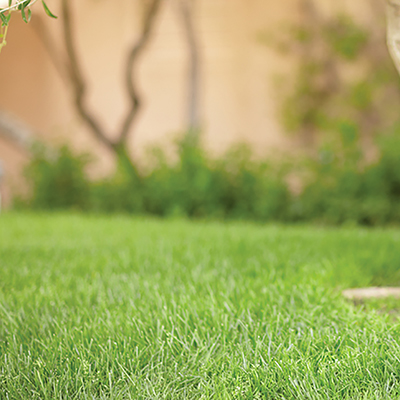 Close up of yard with thick green grass.