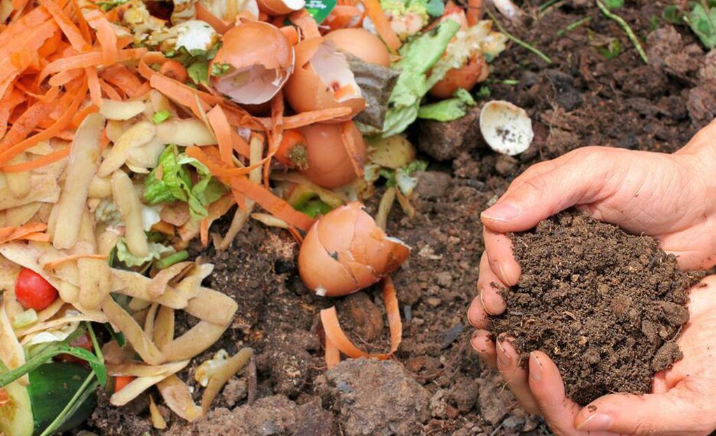Compost in the garden.