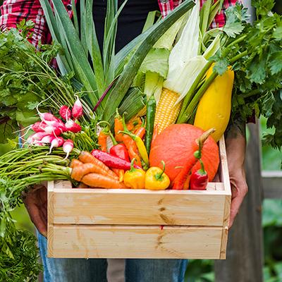A gardener holds a basket of vegetables