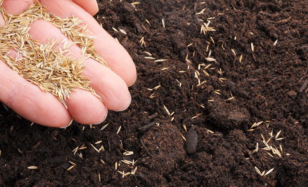 Gardener sowing lettuce seeds in soil