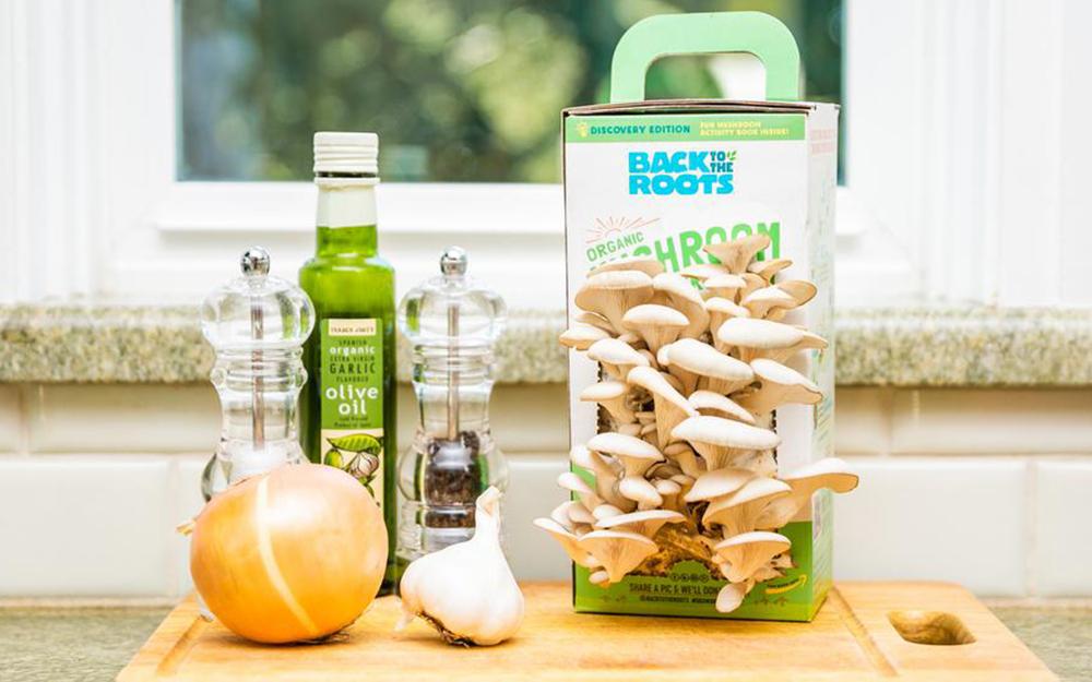 Mushroom kit sitting beside a salt and pepper shaker, bottle of oil and an onion.