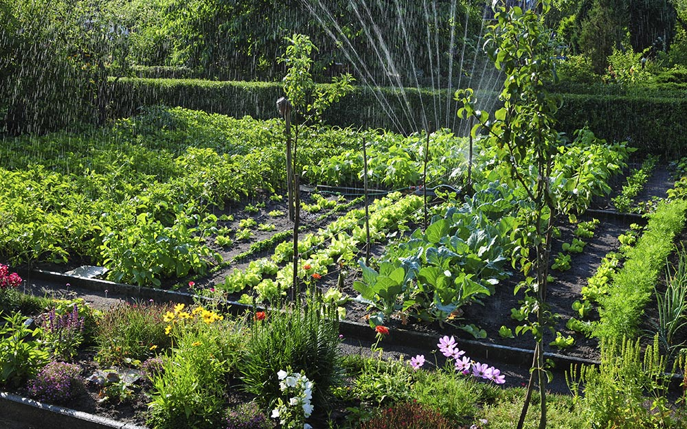 A large organic garden with flowers and edible plants.