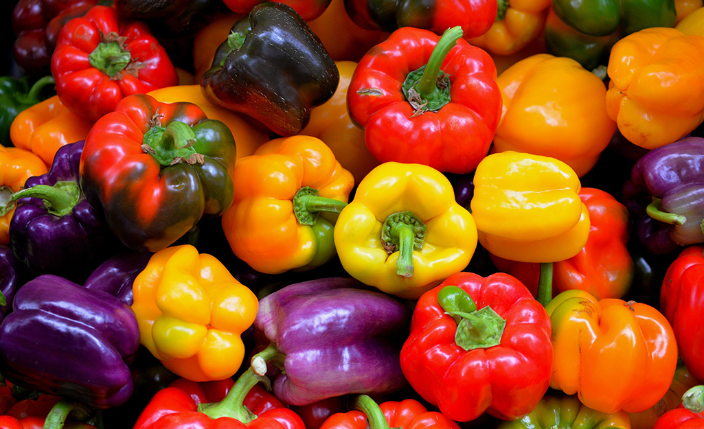Red, yellow, orange and purple bell peppers