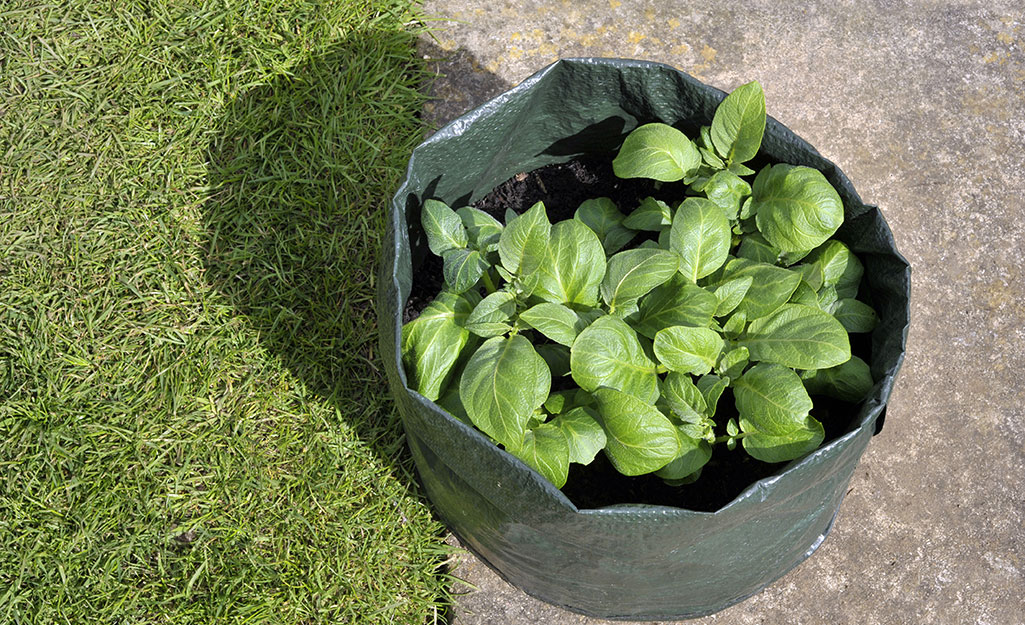 Plants growing in a grow bag
