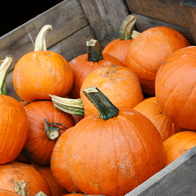 Simple Tips for Growing and Storing Pumpkins