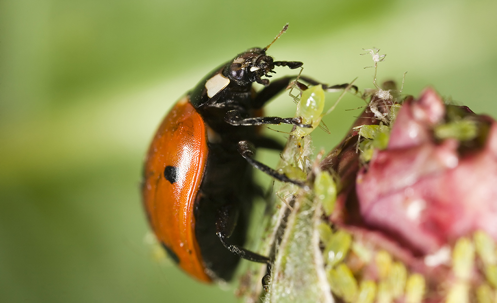 Resolve Pest Problems