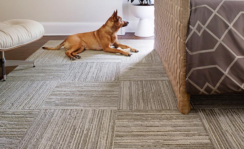 A dog sitting on a new carpet tile floor.