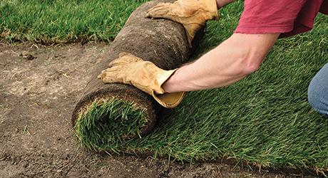 Man rolling out a section of sod.