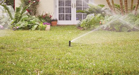 Sprinkler heads watering a green lawn.