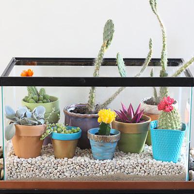 Diy Fish Tank Terrarium The Home Depot