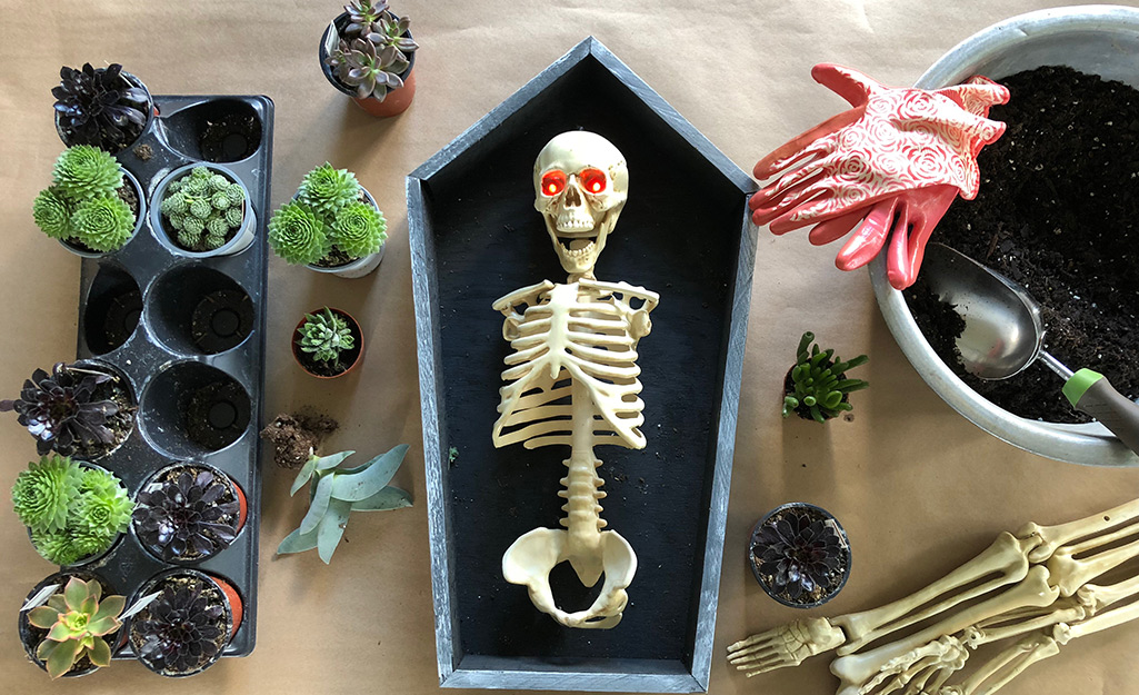 Assemble Skeleton in the Coffin