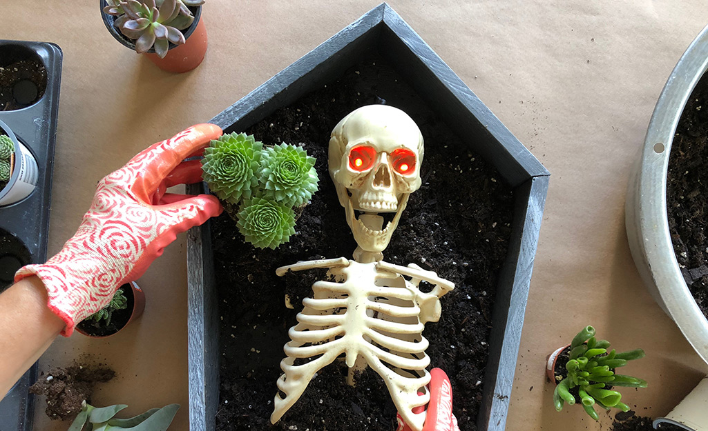 Plant Succulents in the Coffin