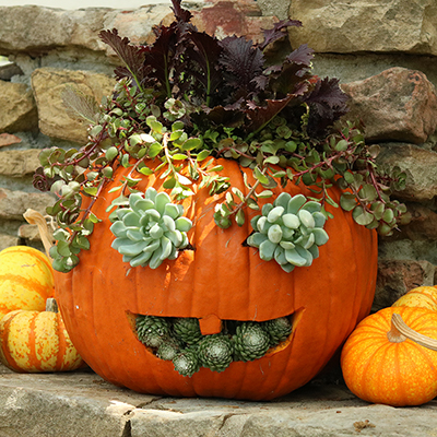 A pumpkin planter with carved eyes and mouth that is filled with succulents.