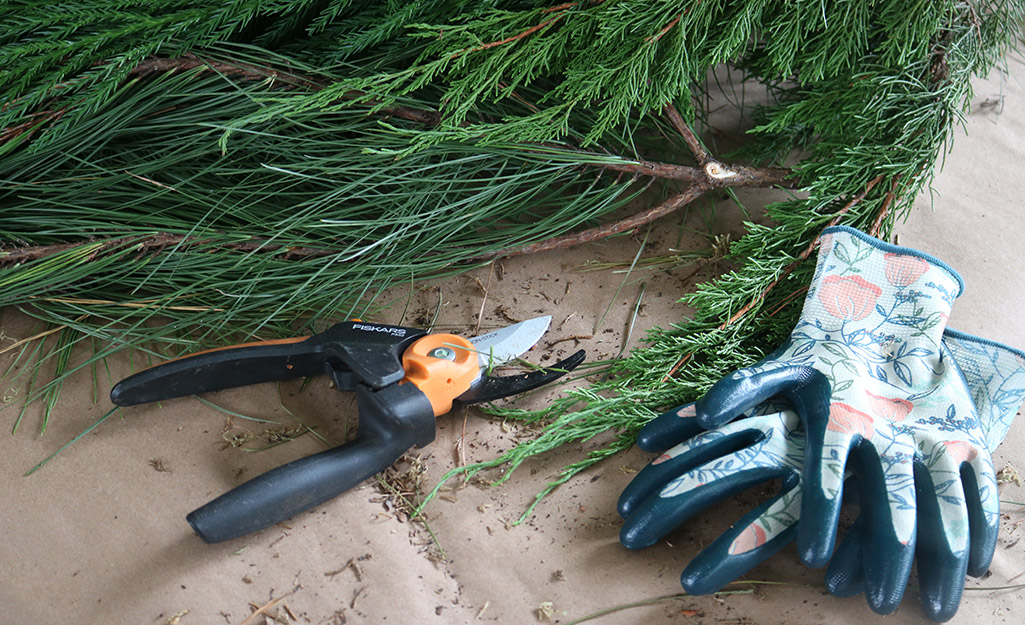 Cut pine branches next to gardening shears and gloves.
