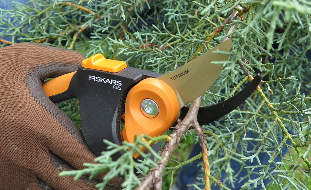Someone trimming fresh evergreens with floral shears.