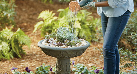 Succulents in a bird bath with a watering can