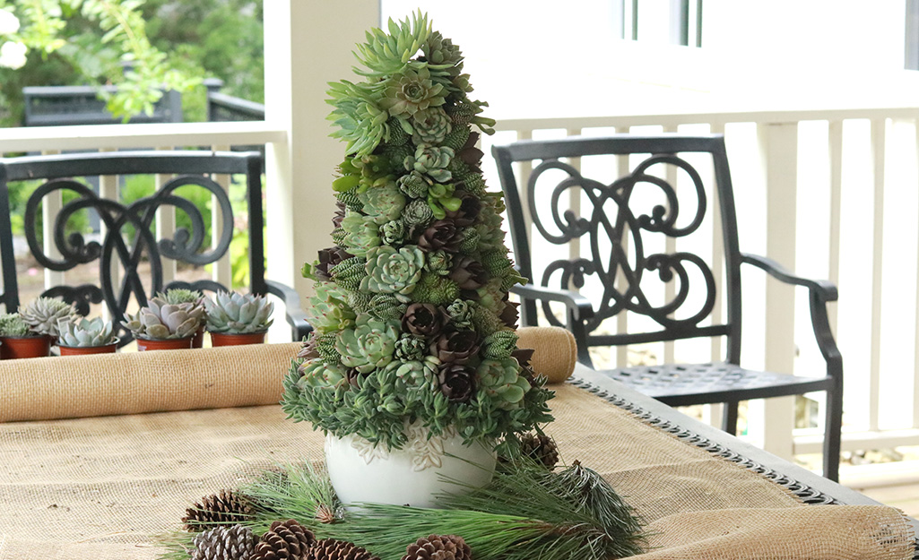 Embellish and Enjoy (the Succulent Christmas Tree)