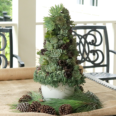 How to Make a Succulent Christmas Tree Centerpiece
